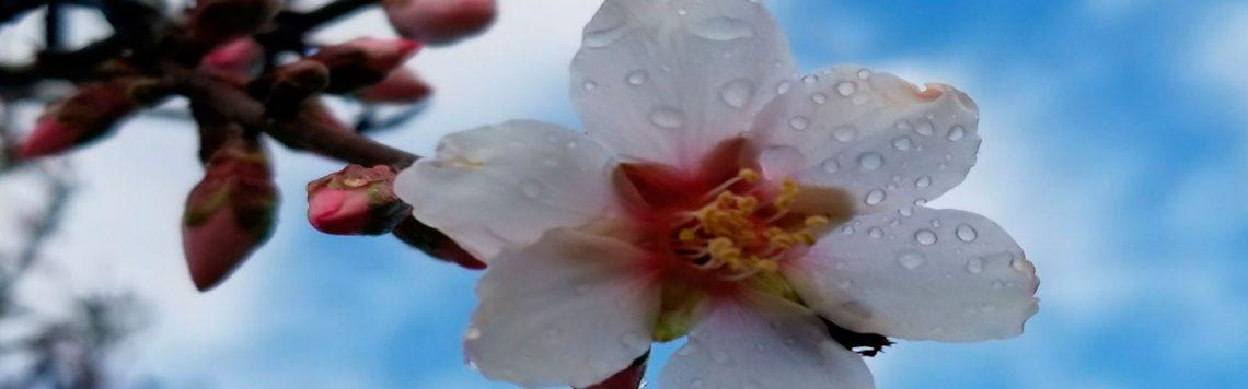 flor-slide