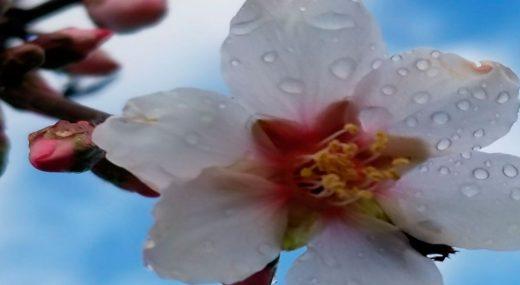 flor-diapositiva