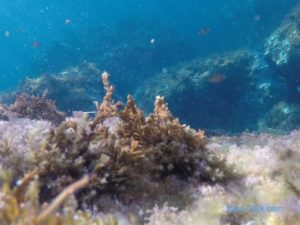 fonsmarins